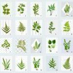 Vintage Botanical illustrations Mee..