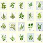 Vintage Botanical illustrations wit..