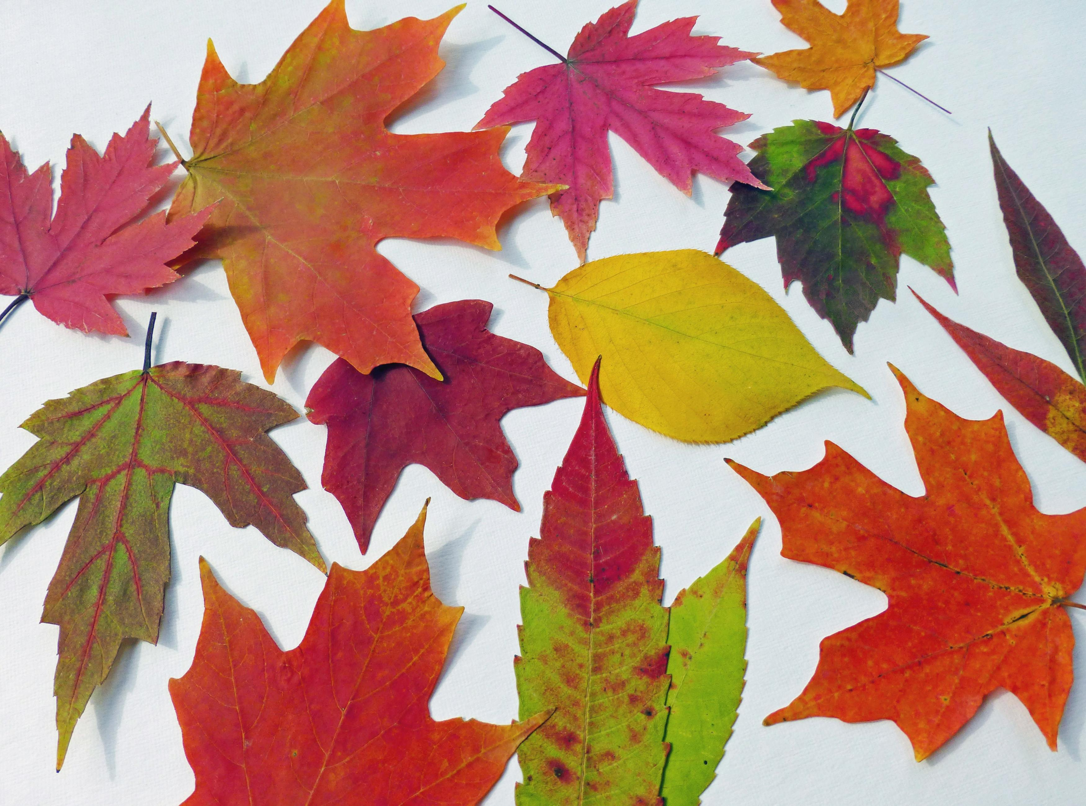 autumn leaves qty 50 fall leaves table decorations autumn